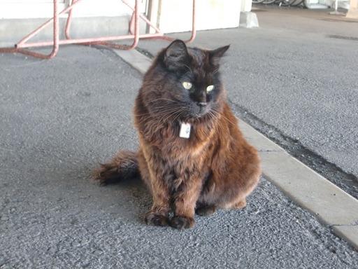 駅猫おさむくん.JPG